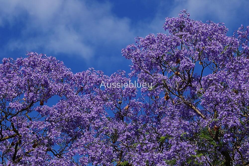 Jacaranda. by Aussiebluey