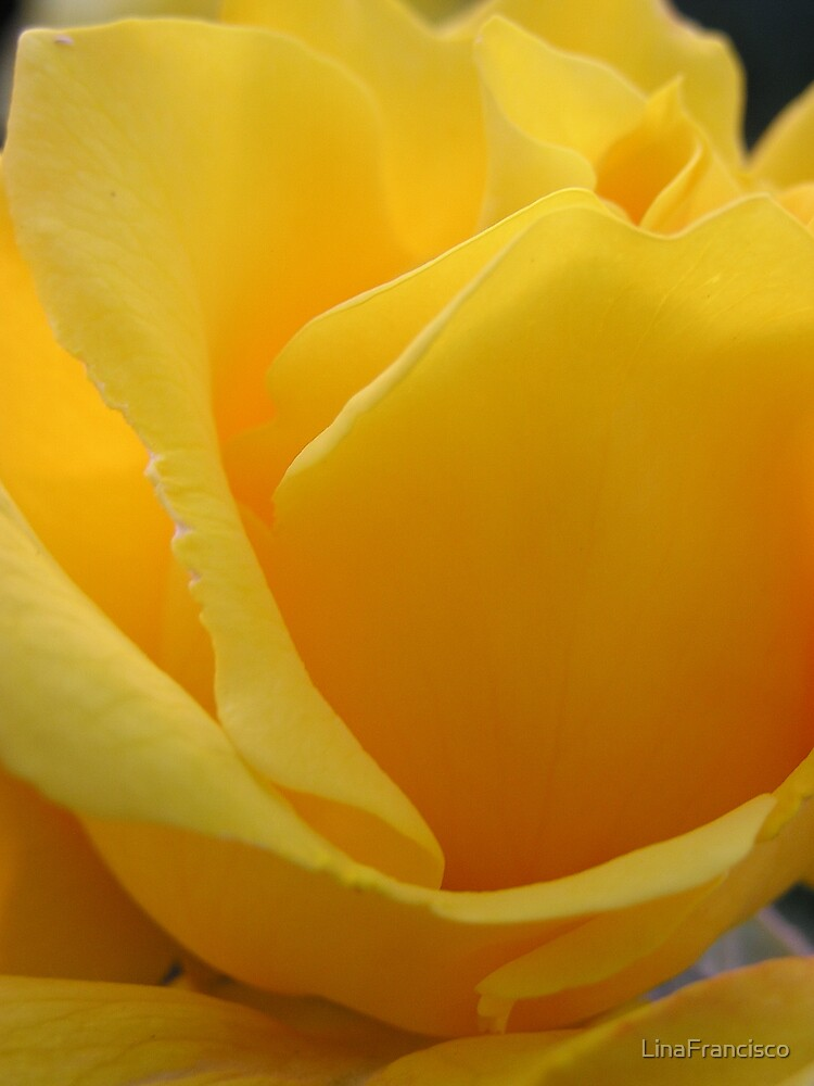 Yellow Rose by LinaFrancisco