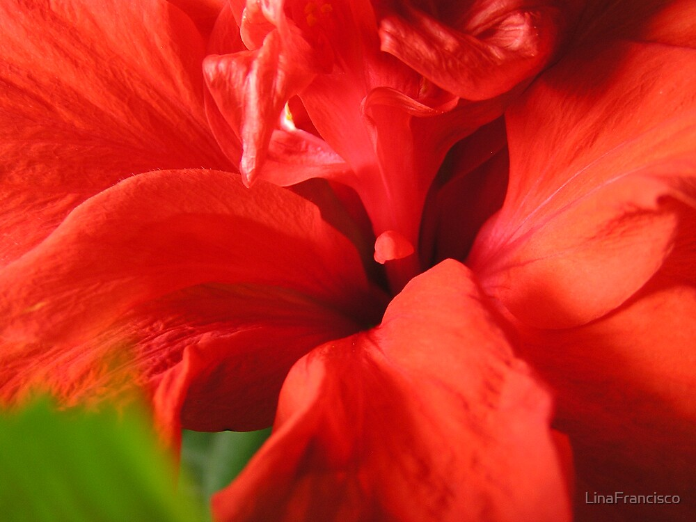 Hibiscus by LinaFrancisco