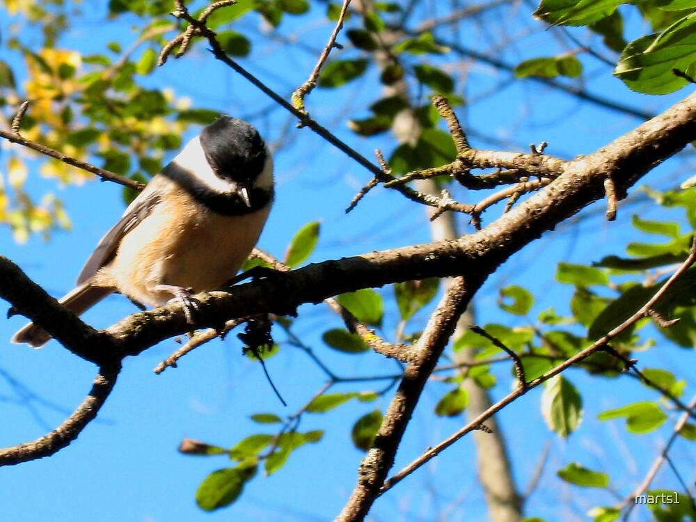 Here birdie 4 by marts1