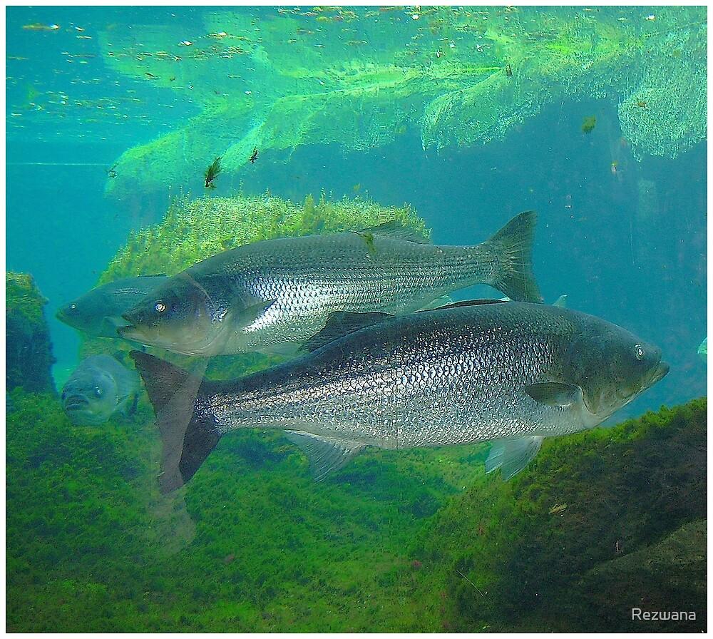 Swimming underwater by Rezwana