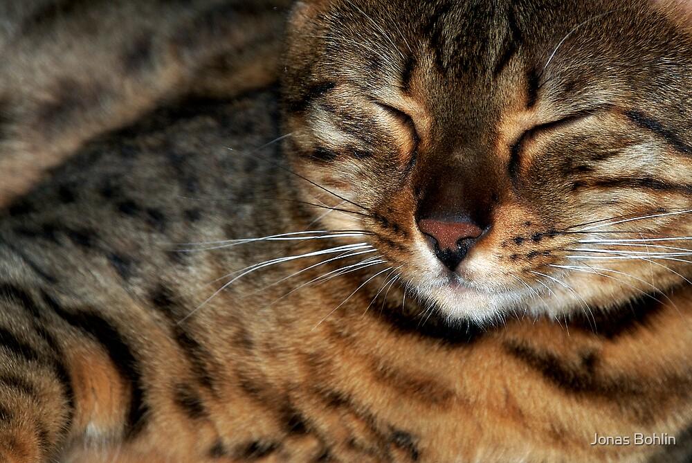Cosy Cat by Jonas Bohlin