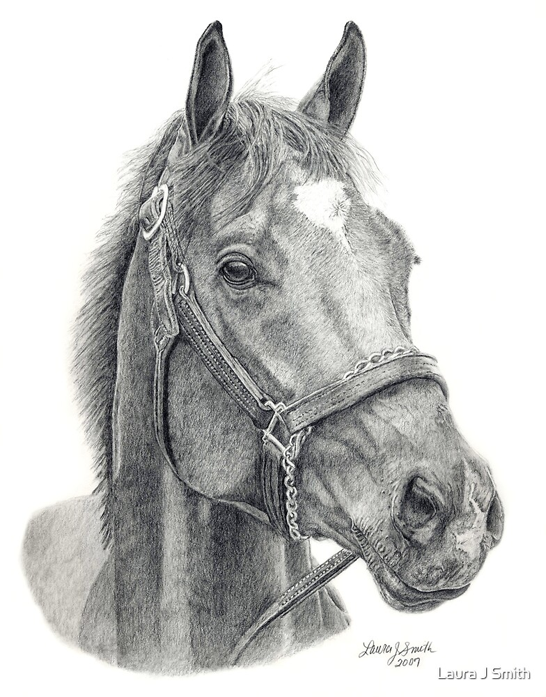 Barbaro - America's Champion by Laura J Smith