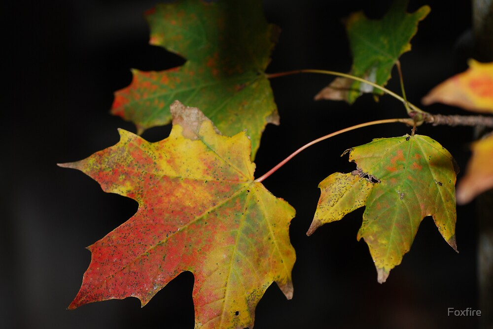 Autumn shades by ©FoxfireGallery / FloorOne Photography