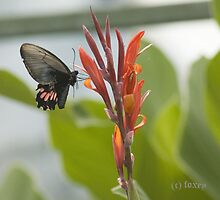 Butterfly to go by ©FoxfireGallery / FloorOne Photography