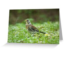 Fieldfare Greeting Card
