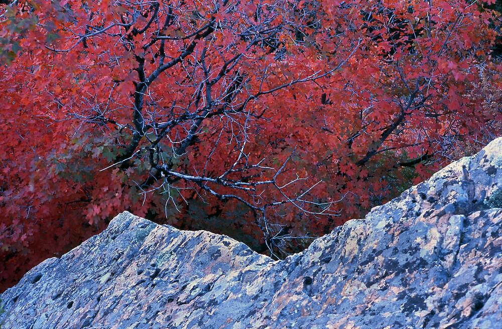 Abstract Autumn by mymamiya
