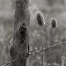 The Fence by mymamiya