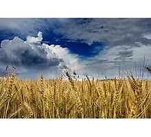 Landscape: 'Storm Over the Wheatfields 1' Photographic Print