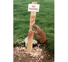 Clever Critter Photographic Print