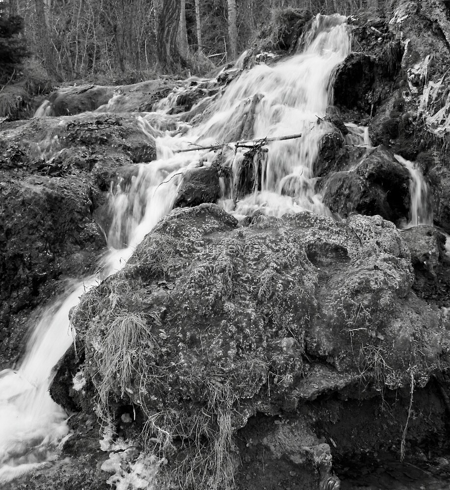 Black and White Big Spring Falls by Synevja
