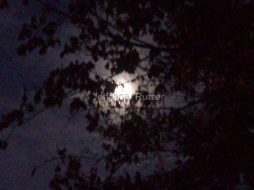 moon with trees 2 by Johanna  Rutter