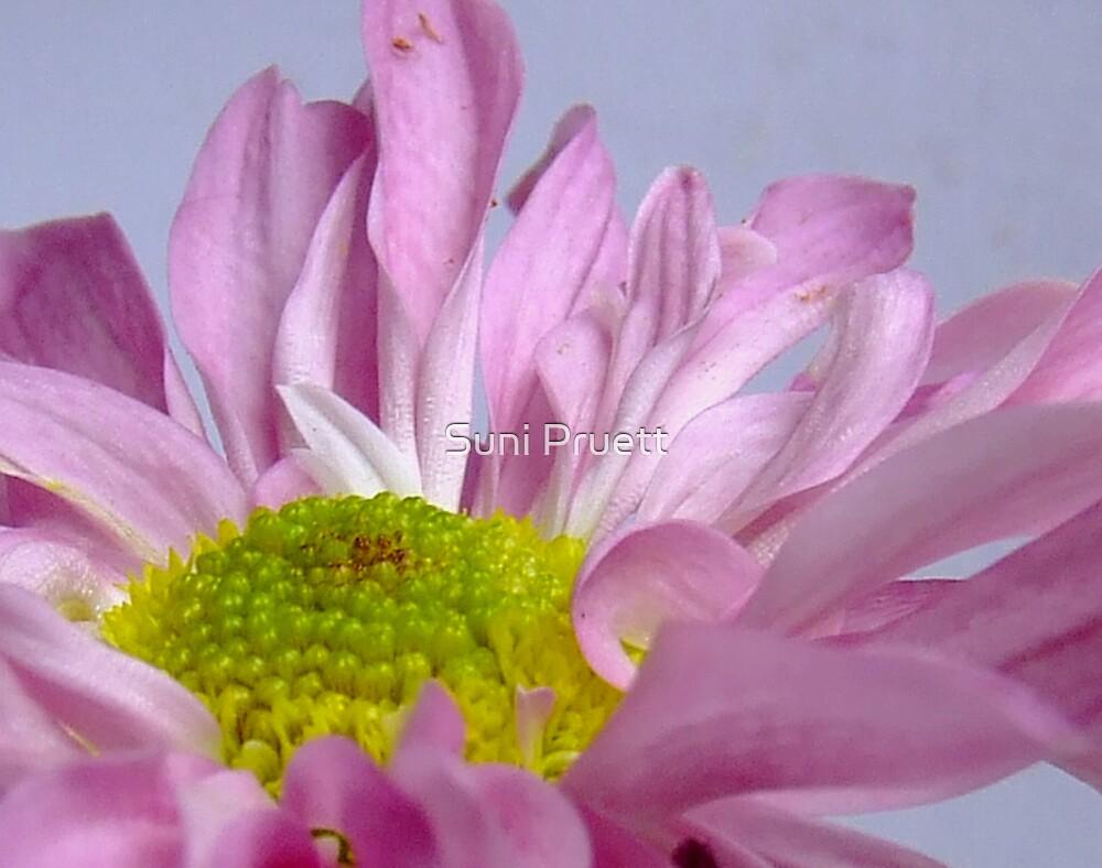 Petals by Suni Pruett