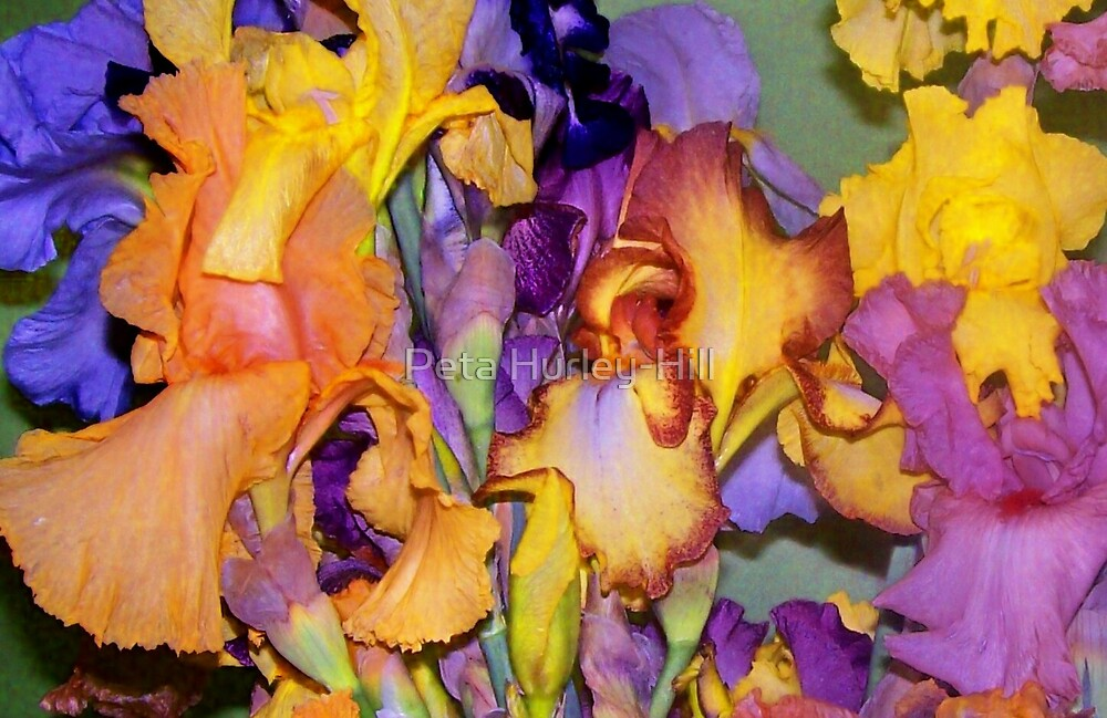 irises by Peta Hurley-Hill