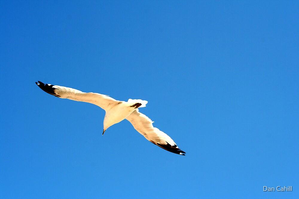 Jonathan Livingston Seagull by Dan Cahill