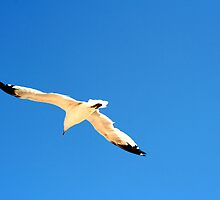 Jonathan Livingston Seagull by Dan Cahill