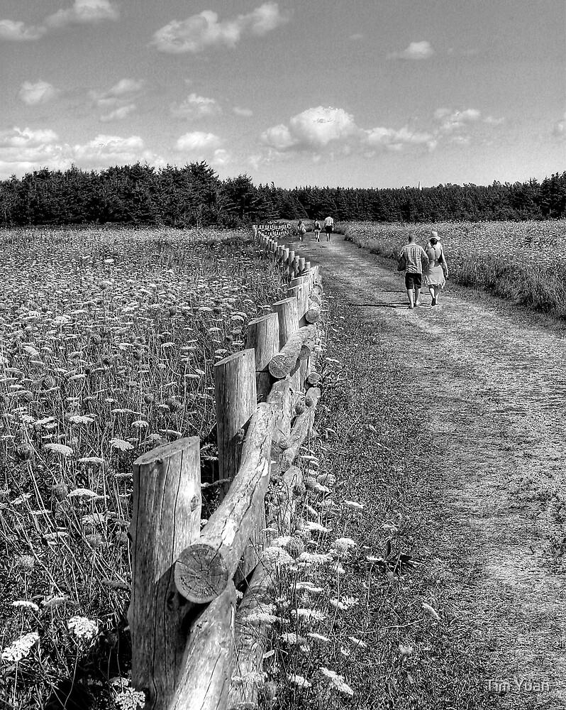 Path by Tim Yuan