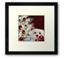 Snowdrop the Maltese at Christmas Framed Print