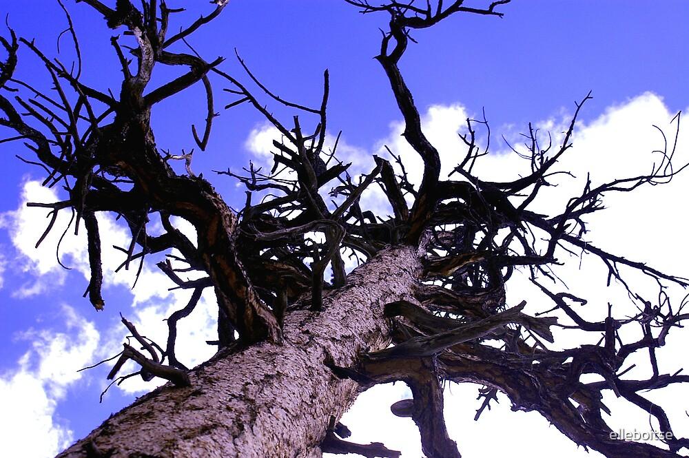 cool tree by elleboitse