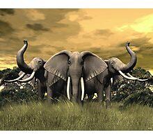 Elephant Stand Photographic Print