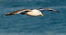 Seagull flight by Eyal Nahmias