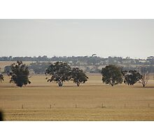 Wheatbelt  Photographic Print