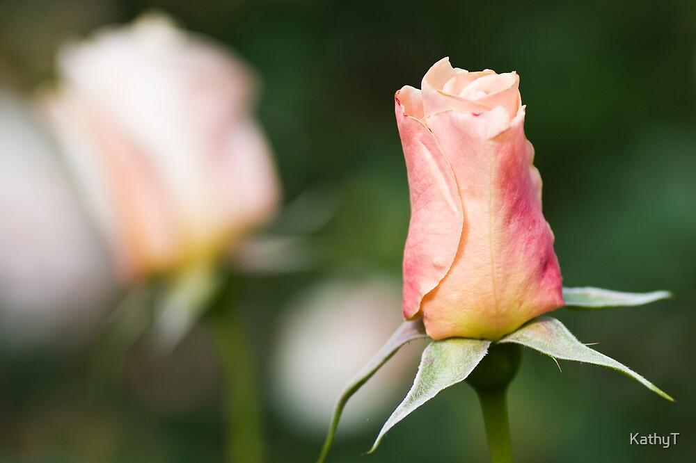 Rosebuds by KathyT