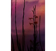 Rose Colored Daydream Photographic Print