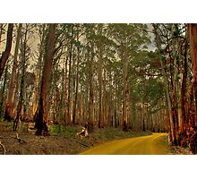The Yellow Dirt Road Photographic Print