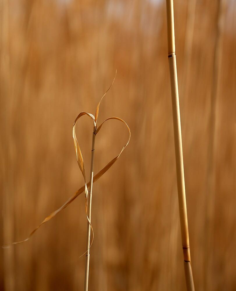 I love Nature by mymamiya