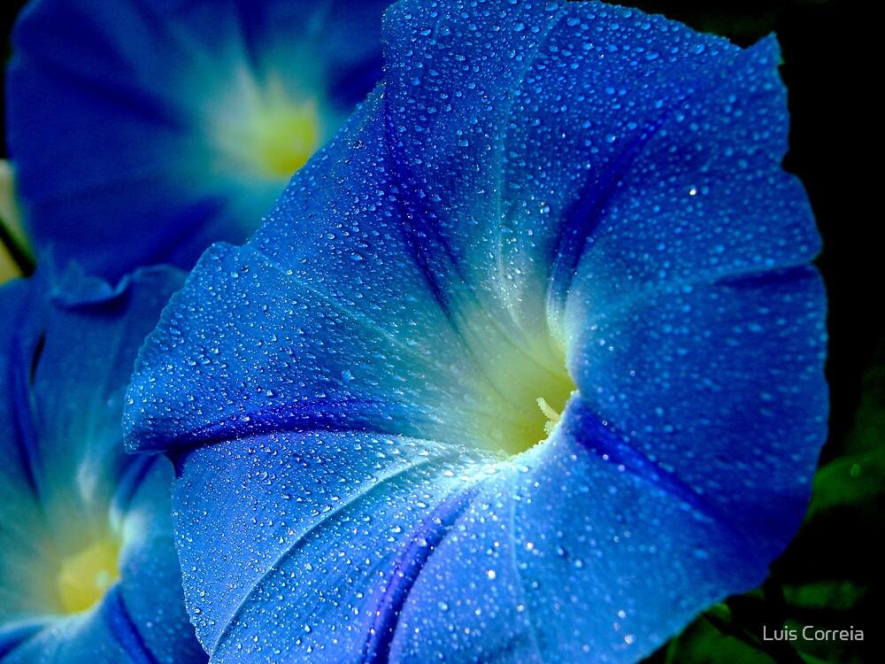 Blue Dew by Luis Correia