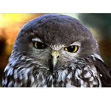 Barking Owl Photographic Print