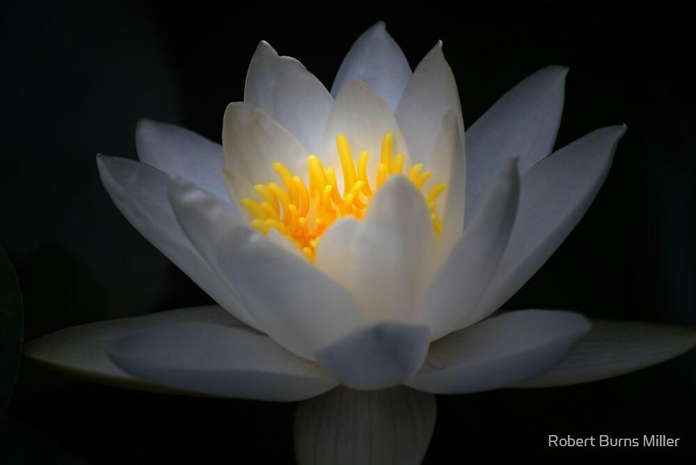 Enlightenment by Robert Burns Miller