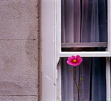 Window dressing  by TonyLegg