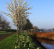Spring Has Sprung by Wrayzo