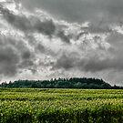 Before the storm by Kurt  Tutschek