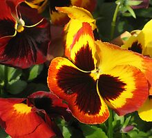 pansy by odile