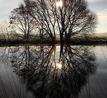Tree Highlights by Wrayzo
