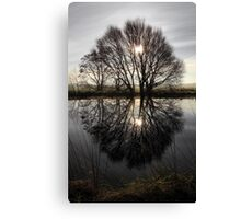 Tree Highlights Canvas Print