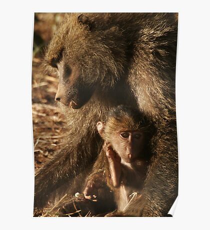 Baby Baboon Poster
