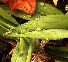 leaf by atb1