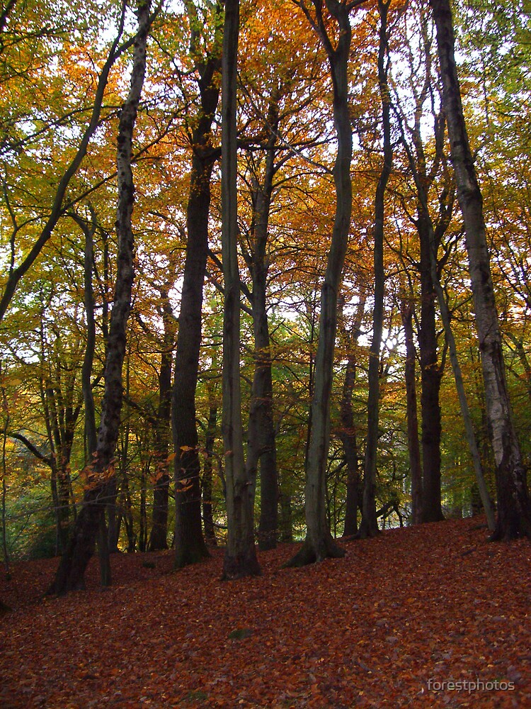 Autums Carpet by forestphotos