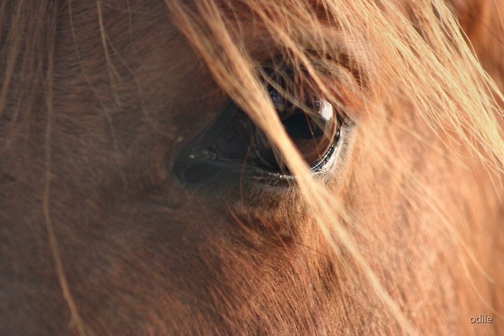 horse's eye by odile