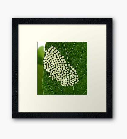 Signs of Life Framed Print