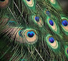 Plumage by SD Smart