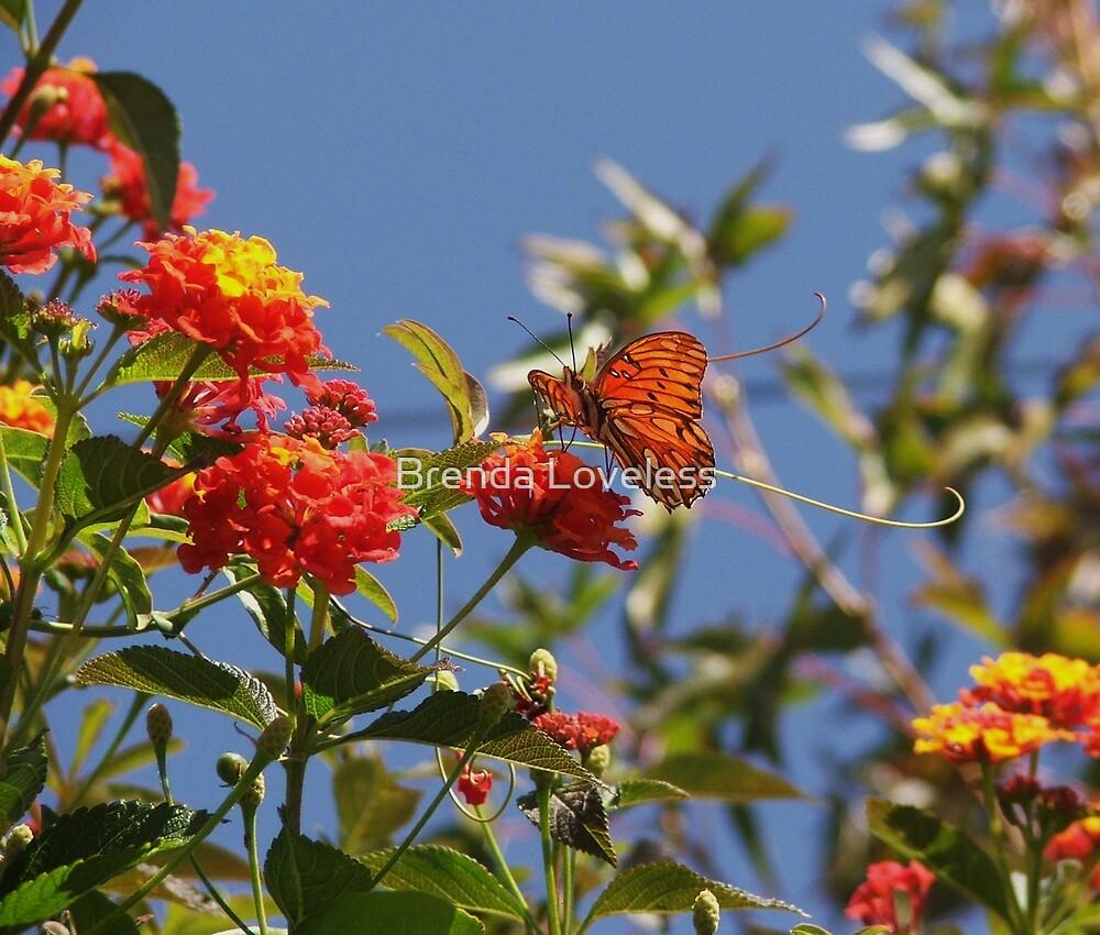 orange butterfly scene by Brenda Loveless