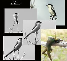 Butcher Bird akd Loggerhead Shrike by Grayce Pedulla-Dillon