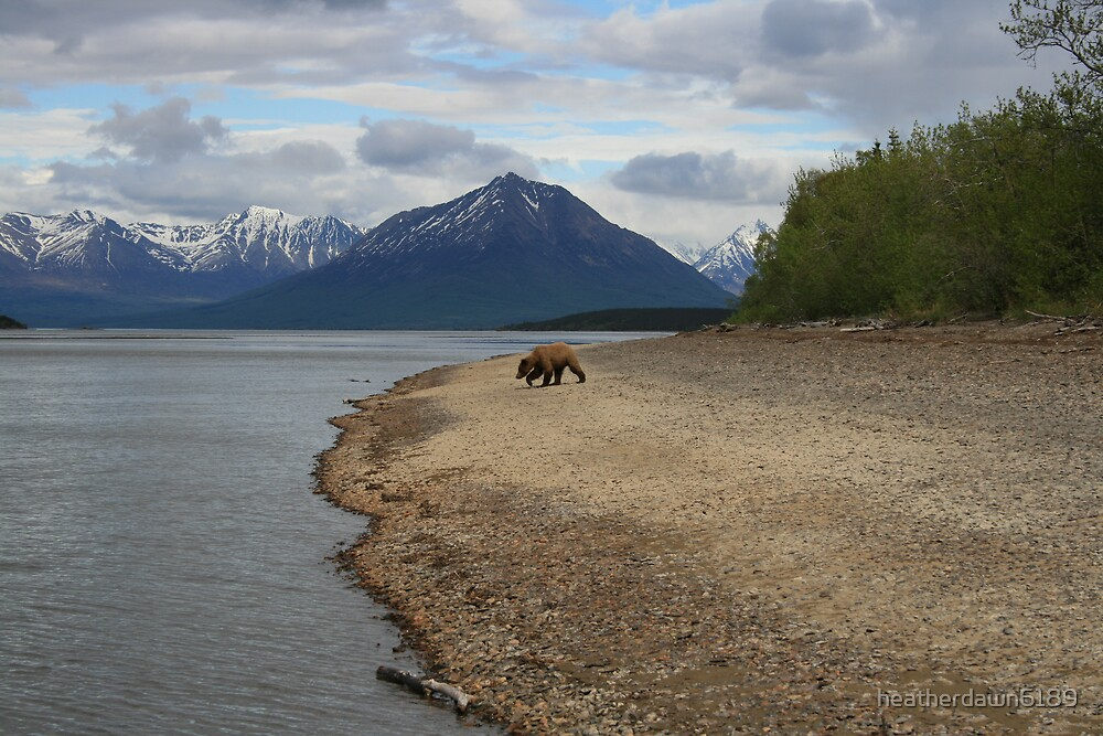 Brown Bear by heatherdawn6189