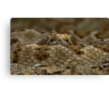 Rattleless Rattlesnake! Canvas Print