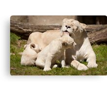Bears Canvas Print